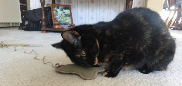 eco-cat-fisher-toy