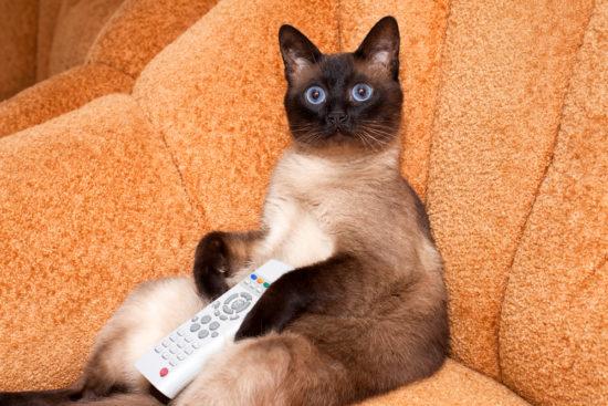 cat-tv-remote