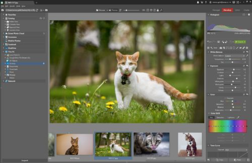photo-editing-software-cat