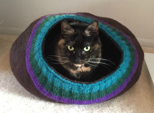 Ruby-meowfia-cat-cave