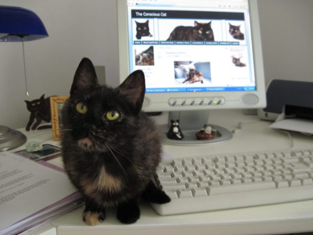 Ruby-kitten-desk-computer