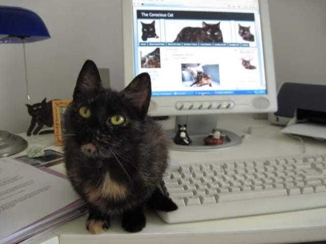 Ruby-kitten-desk-computer