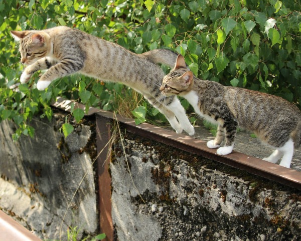 leap-year-kitties