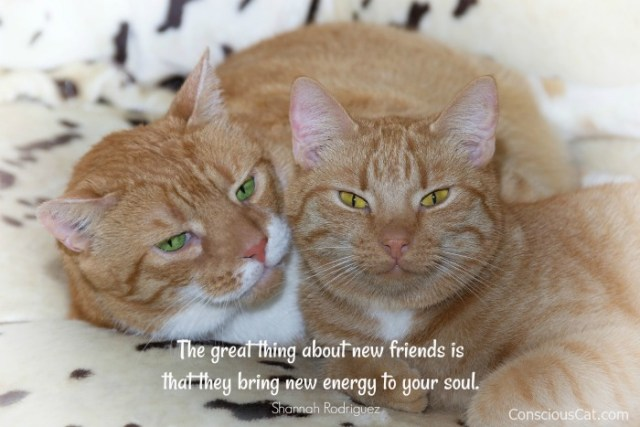 new-friends-new-energy
