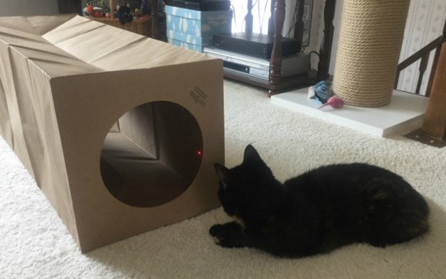 cat-tunnel-paper