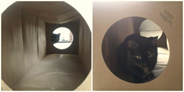 cat-in-tunnel