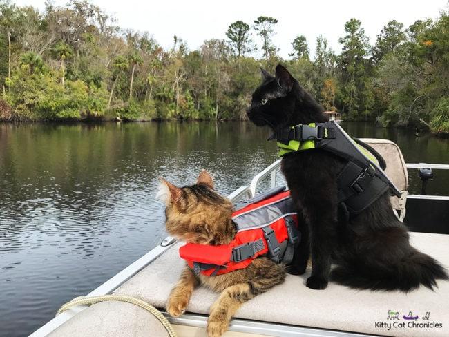 cats-boat