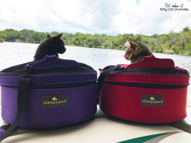 adventure-cats-boat