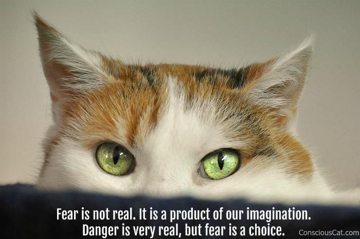 fear-cat