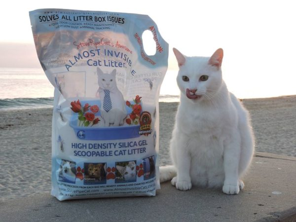 almost-invisible-cat-litter
