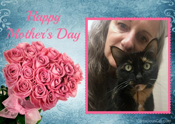 mothers-day-cat