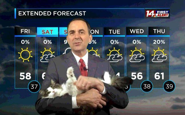 betty-weather-cat