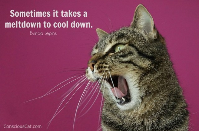 cat-stress-meltdown