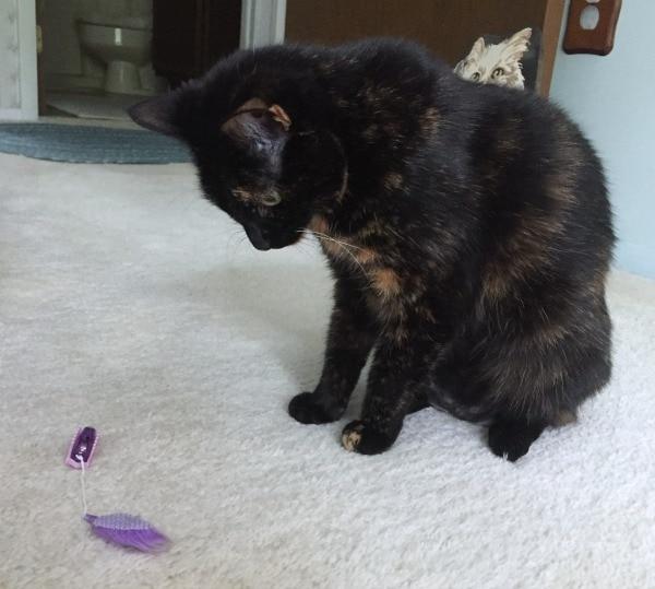 hexbug-cat-toy