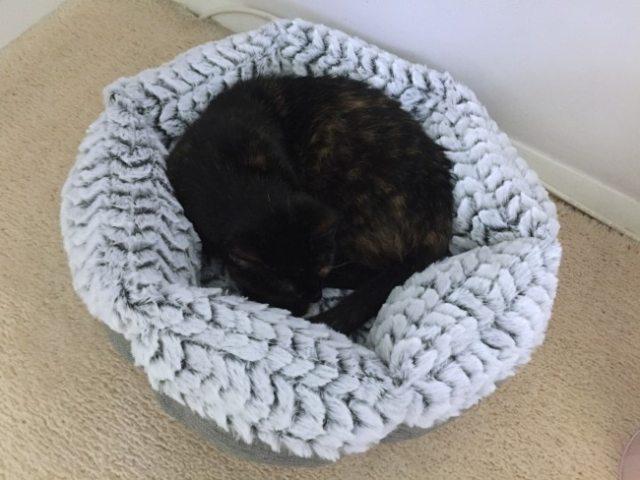 donut-cat-bed-sleeping-cat