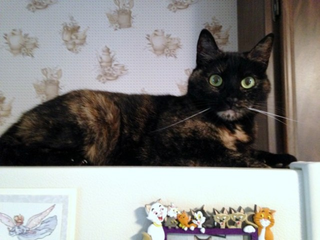 cat-refrigerator