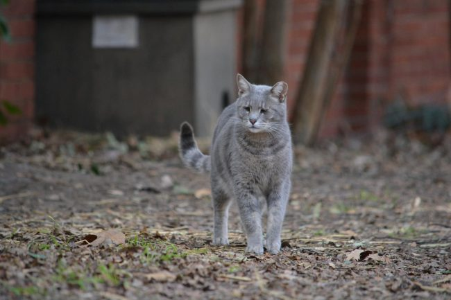 campus-cat