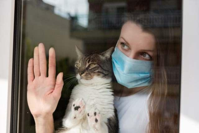 cat-covid-19-preparedness