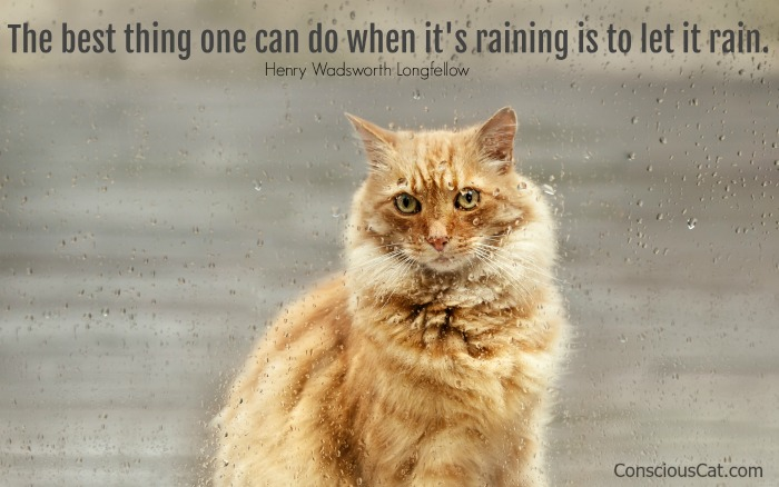 cat-rain-radical-acceptance