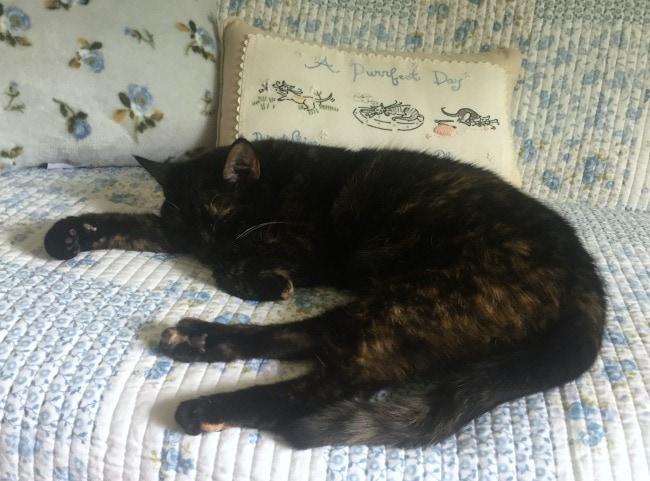 cat-quilt-nap