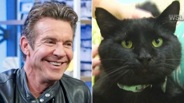 dennis-quaid-cat-adoption