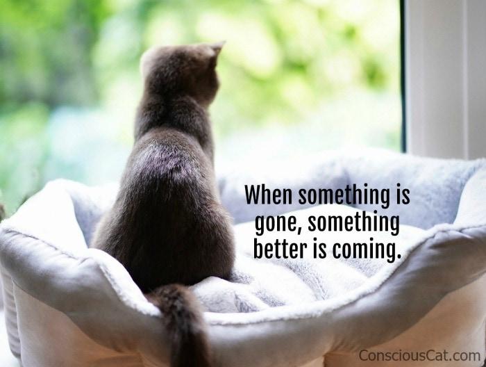 kitten-window-better-future