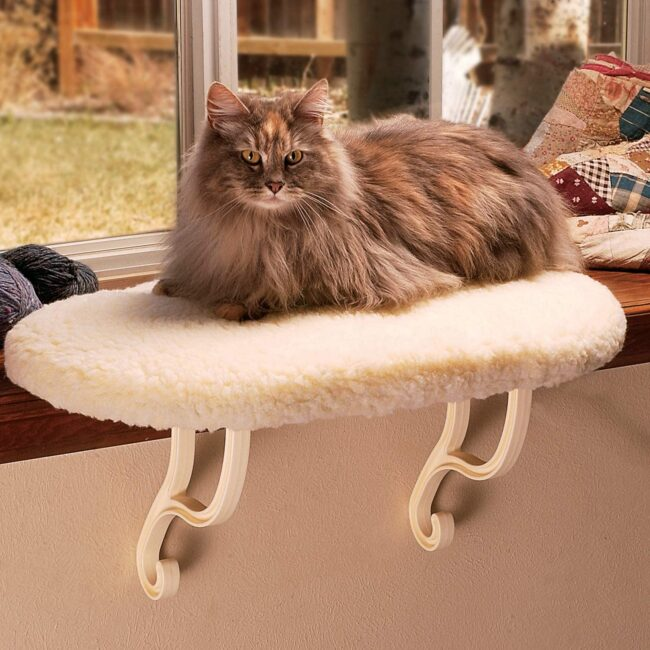 kitty-sill