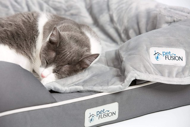 memory-foam-cat-lounge-bed