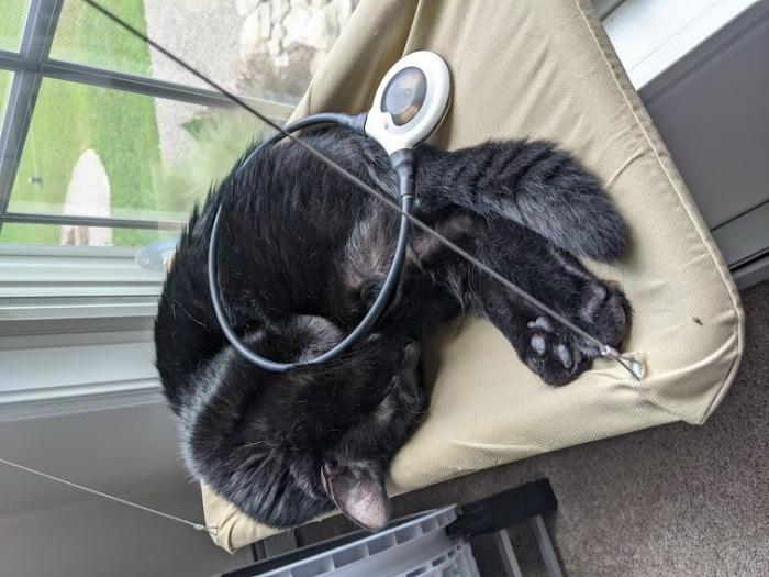 assisi-loop-cat