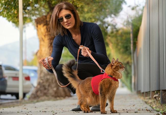 martingale-cat-harness