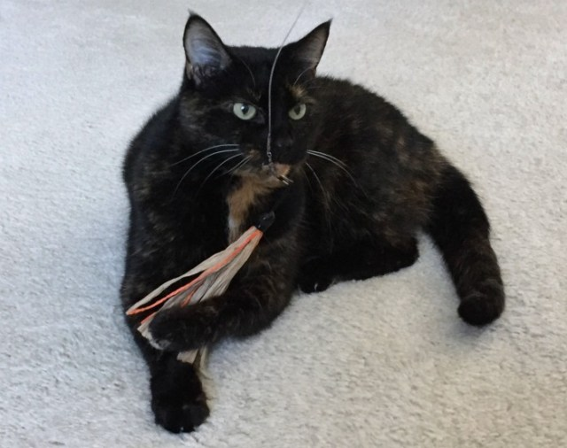 cat-wand-toy
