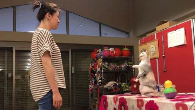 cat-imitating-human
