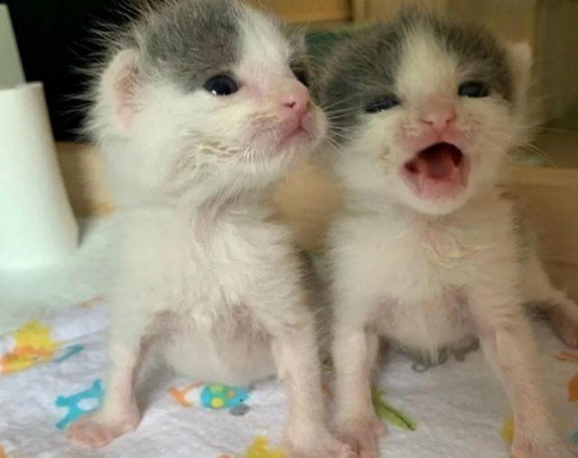 twin-kittens-rescued