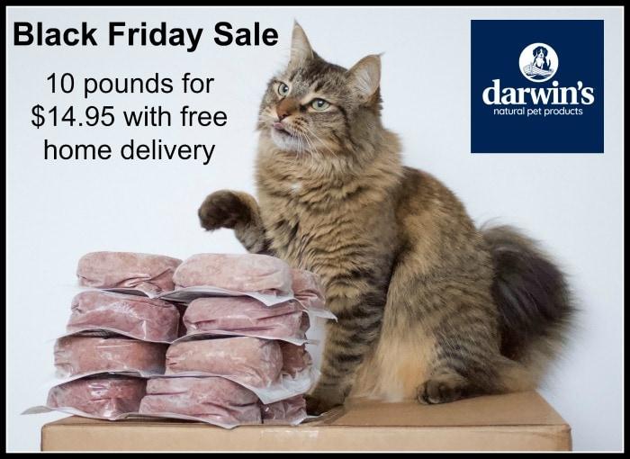 darwins-raw-cat-food
