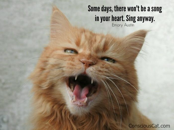 cat-singing