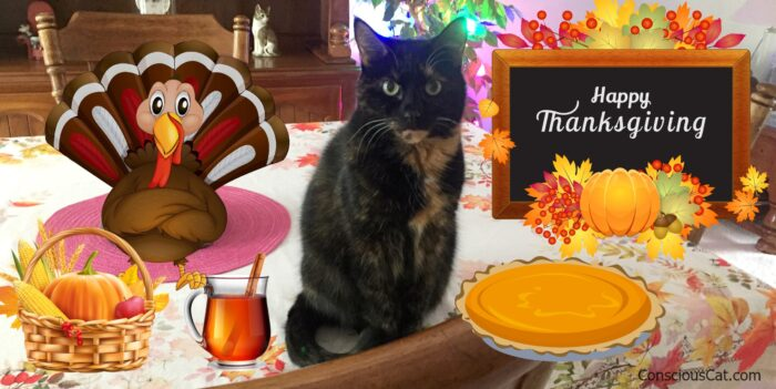 thanksgiving-table-cat