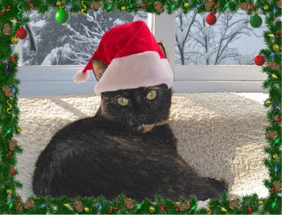 allegra-first-christmas