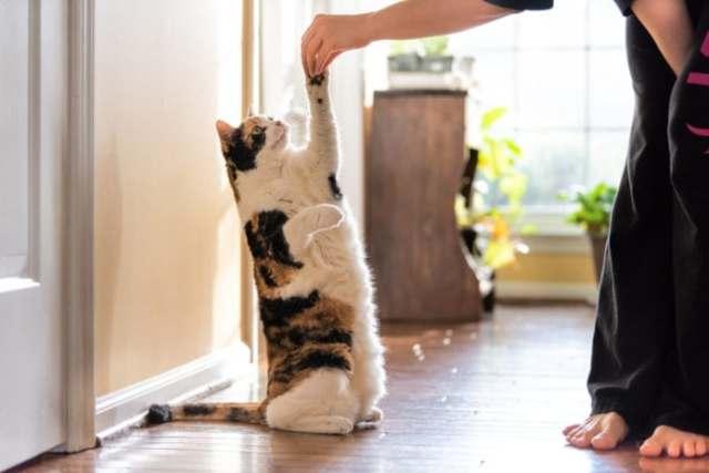 clicker-training-cat