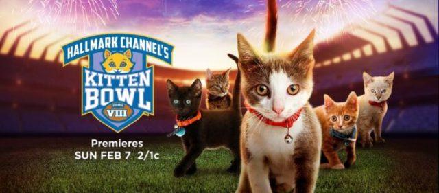 kitten-bowl-2021