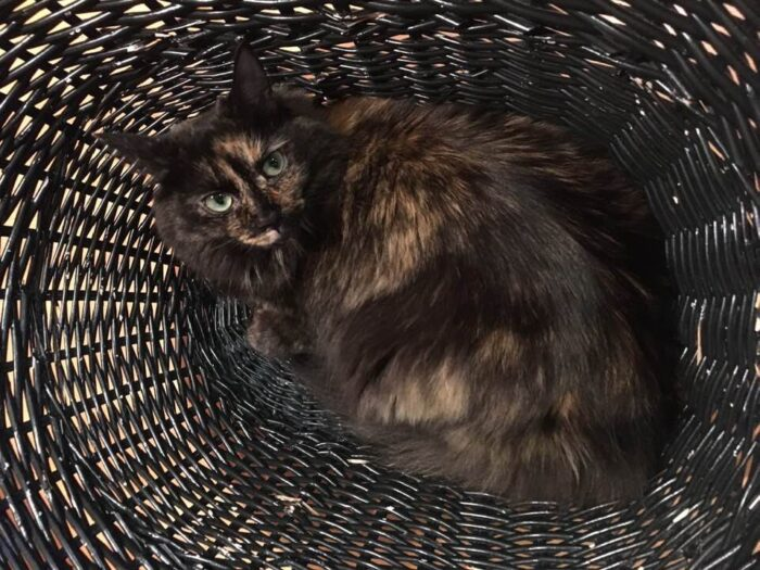 tortoiseshell-cat-basket