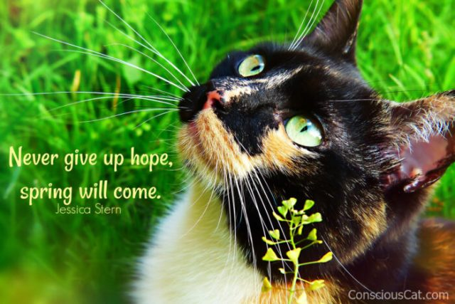 cat-spring-flowers-hope