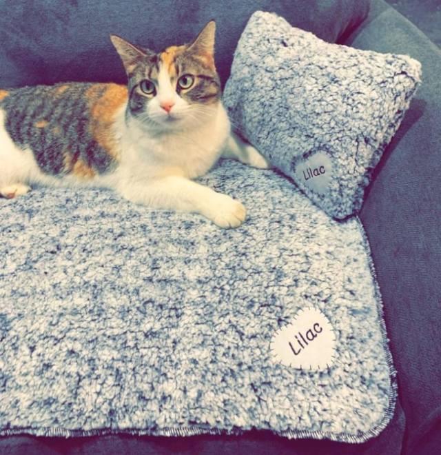 sherpa-cat-blanket-pillow