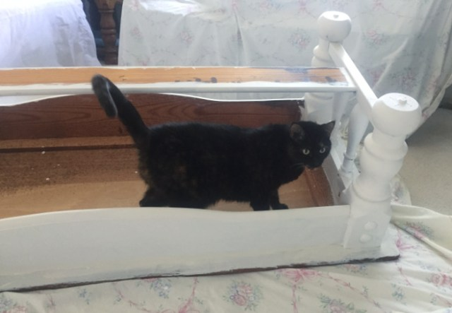 coffee-table-makeover-cat-inspection