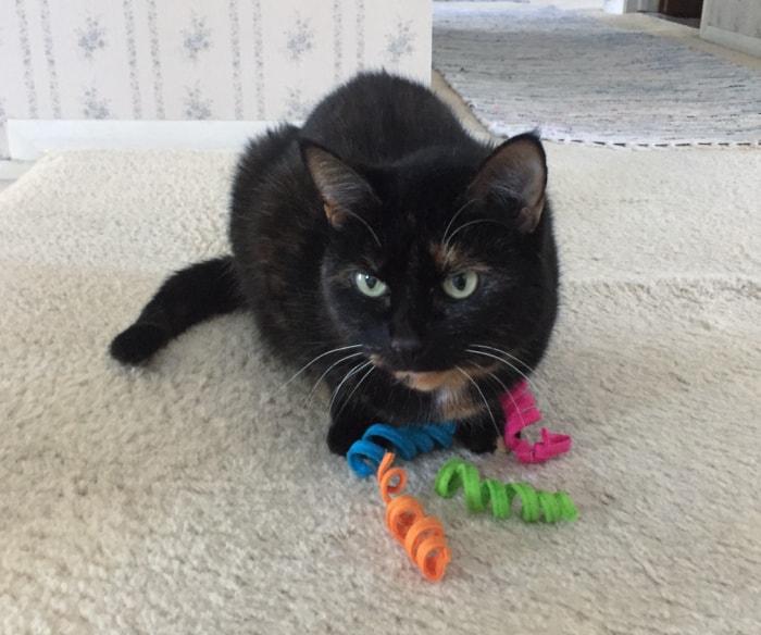 cat-spring-toy