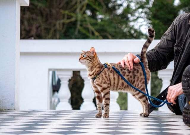 cat-harness-leash