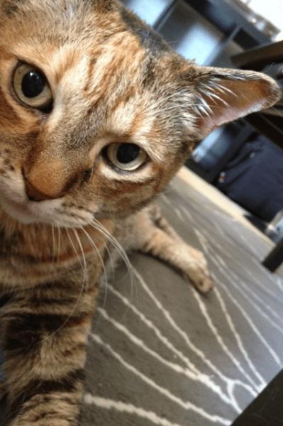 Cumin-love-and-above-cat