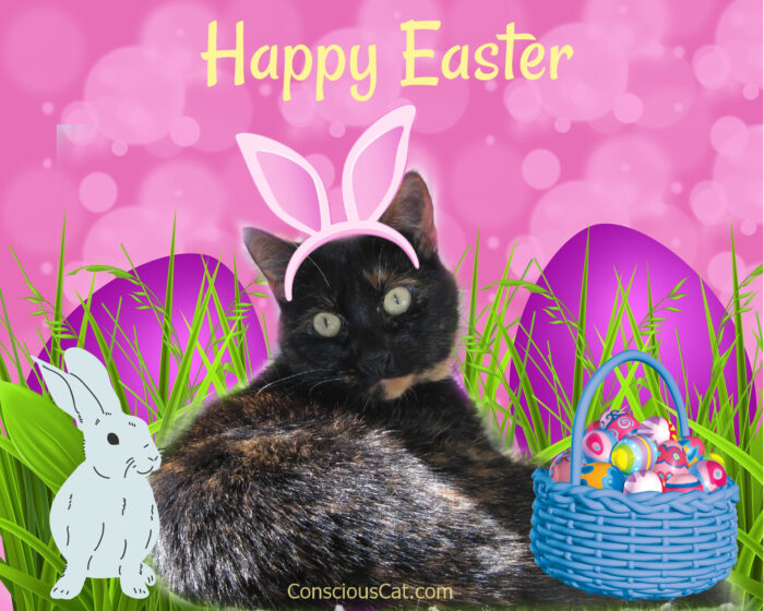 Easter-cat