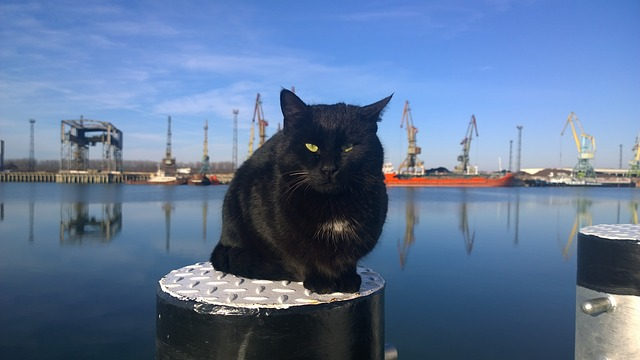 cat-harbor