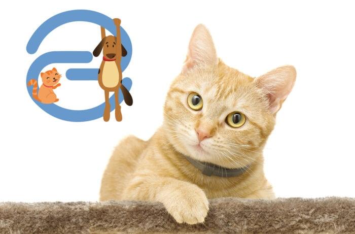 eusoh-pet-insurance
