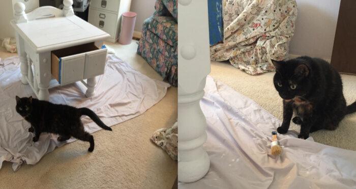 painting-helper-cat